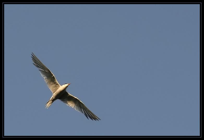http://nasimetabriz3.persiangig.com/image/nasim/5460.jpg